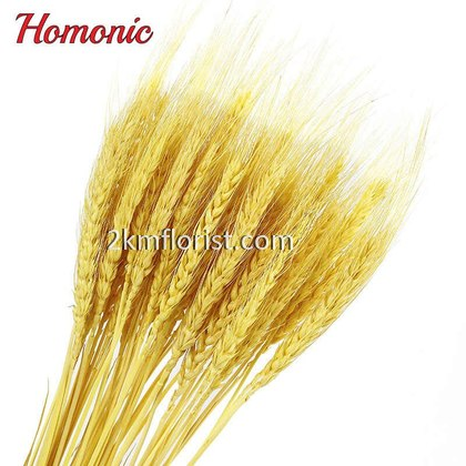 50Pcs Wheat Ears Dried Flower